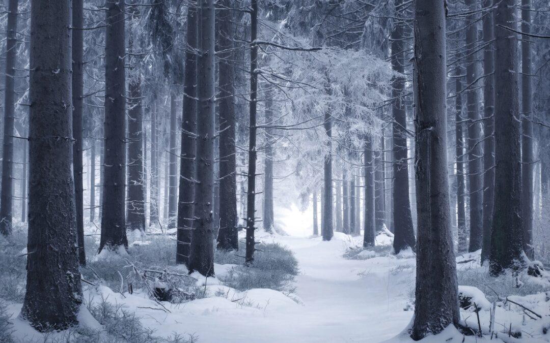 Tonhalle-Orchester Zürich – Paavo Järvi conducts Tchaikovsky's Winter Daydreams Symphony [live Idagio webcast]